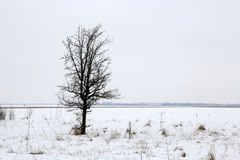 Tree on winter meadow Stock Photos