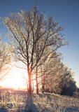 Tree in winter morning Stock Photo