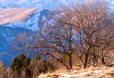 Tree winter mountains Stock Images