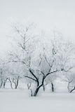Tree at winter Stock Photography