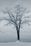 Tree at winter Royalty Free Stock Images