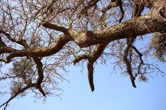 Tree of life 3. The tree before winter , sadness Royalty Free Stock Photos
