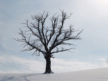 Tree in winter season (3). Tree in winter season, with snow and light blue sky with clouds Stock Images