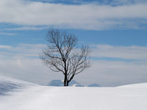 Tree in winter season (5). Tree in winter season, mountains in background Royalty Free Stock Images