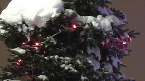 Tree in the winter snow. Christmas tree in winter white and fluffy snow stock footage