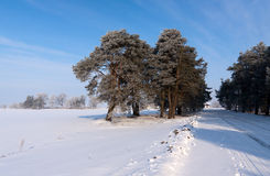 Tree in winter with snow covered fields Stock Photos