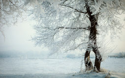 Tree in the winter 2. Some people say this is rime, or icicles stock photo