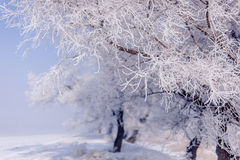 Tree in the winter 3. Some people say this is rime, or icicles stock photography