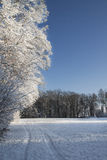 Tree in winter. Winter tree in switzerland, zurich with snow Royalty Free Stock Photo
