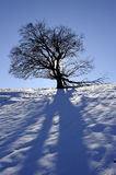 Tree in winter time Stock Photo