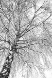 A tree in winter time Royalty Free Stock Images