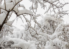 Tree in winter time, branches covered with white snow and ice Stock Images