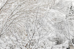 Tree in winter time, branches covered with white snow and ice Stock Photos