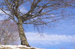 Tree in winter. Stock Photos