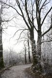Tree, Winter, Woody Plant, Branch stock images