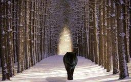 Tree, Winter, Woody Plant, Snow Royalty Free Stock Photo