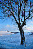 Tree in winters landscape. Scenic view of lone tree in winters snowy landscape royalty free stock photography
