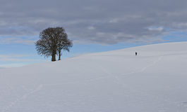 A tree on a wintery hill Royalty Free Stock Photo
