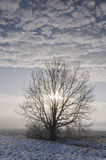 Tree in wintry landscape Stock Photos