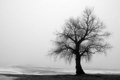 Tree in Wintry landscape. Scenic view of lone tree in Wintry landscape with foggy background royalty free stock photography
