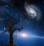 Tree of wisdom Royalty Free Stock Photo