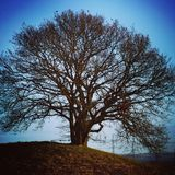 Tree of wisdom. A hilltop with an old tree Stock Photo