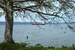 Tree With A View Of The Astoria Harbor. Royalty Free Stock Images