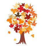 Tree With Autumn Leaves Stock Photos