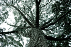 Tree With Branches Spred Out Stock Photography