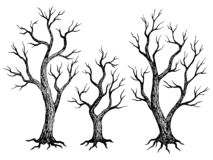 Free Tree Without Leaves Graphic Dead Plant Black White Isolated Sketch Illustration Vector Stock Images - 193697544
