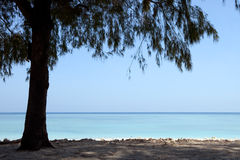 Tree on a wonderful tropical beach. Single tree on a beach with turquoise water Royalty Free Stock Images