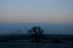 The Tree. A Tree in a wonderfull foggy landscape Royalty Free Stock Photos