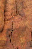 Tree Wood Bark Background. Bark from a gumtree with a warm tone stock photos