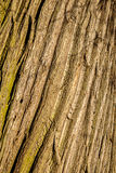 Tree Wood Bark Texture Stock Photos