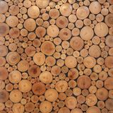 Tree wood brown circle stumps Royalty Free Stock Photography