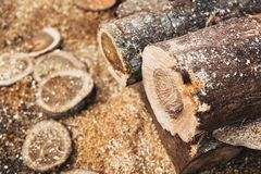 Tree wood cut log forest environmental destruction. Industry Stock Image
