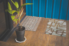 tree on wood floor and Blue color corrugated metal sheet Stock Images
