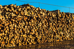 Tree Wood Logs Stacked stock image