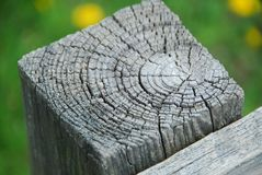 Tree Wood Rings Texture Royalty Free Stock Images