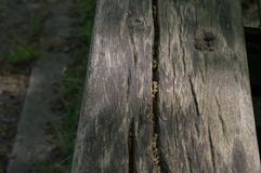 Tree, Wood, Trunk, Grass Stock Photo