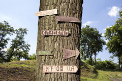 Tree in the woods with signs on it Royalty Free Stock Photos