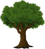 Tree, Woody Plant, Plant, Leaf royalty free stock image