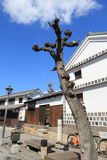 Tree, woody, plant, sky, building, house, facade, branch, roof. Photo of tree, town, landmark, neighbourhood, architecture, tourism, house, building, vacation royalty free stock images