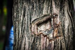 Tree, Woody Plant, Trunk, Wood royalty free stock photography