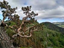 Tree, Woody Plant, Vegetation, Plant royalty free stock photos
