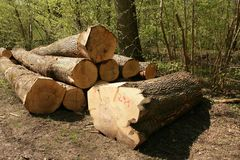 Tree, Woody Plant, Wood, Woodland stock image