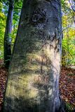 Tree, Woody Plant, Woodland, Trunk royalty free stock images