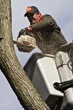 Tree Work. A man removing a dead tree from a bucket lift and chain saw royalty free stock photography