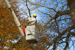Tree work. Professional arborist in cherry-picker bucket doing end of year cleanup work, trimming and pruning tree Stock Photos