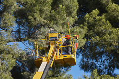 Tree work, pruning operations. Crane and pine wood. Forest royalty free stock photos